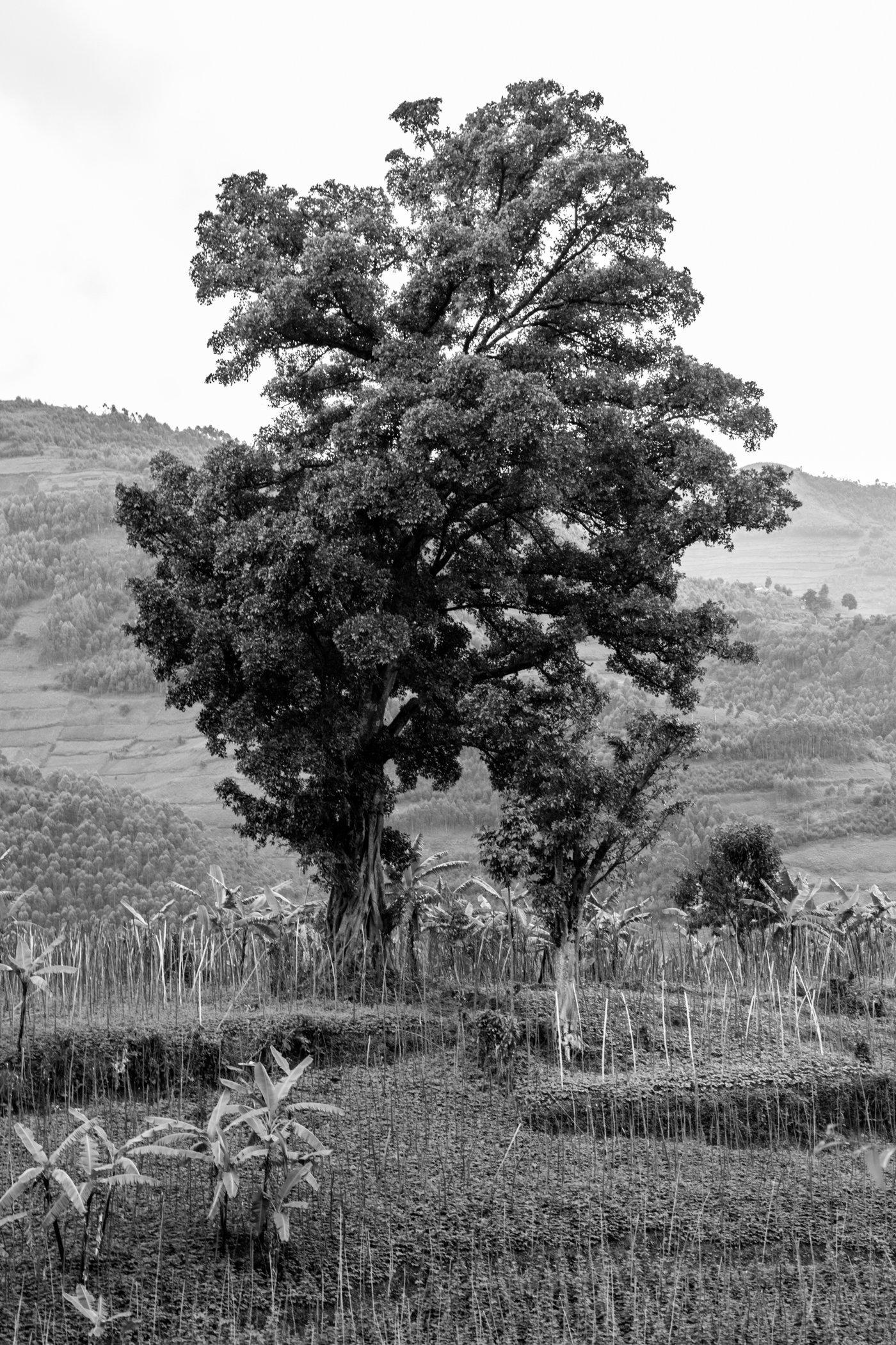Uganda Road Trip_Series-IMG_0742-untitled.jpg