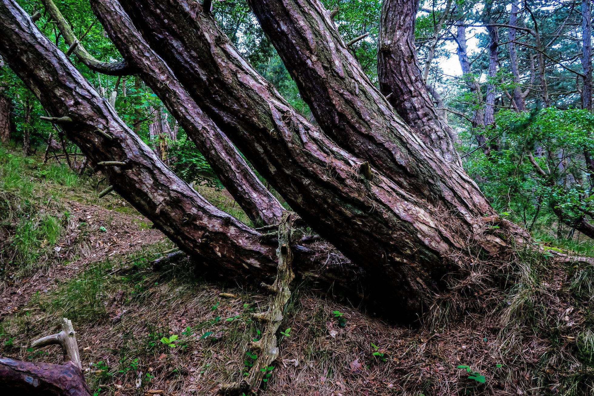 The_Wood-1409.jpg