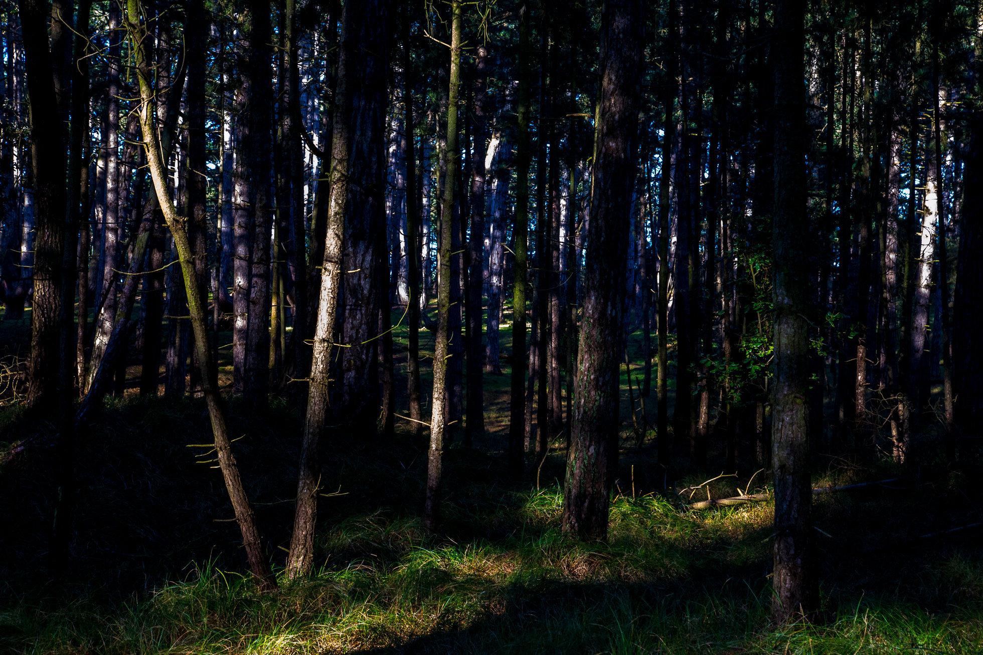 The_Wood-9019.jpg