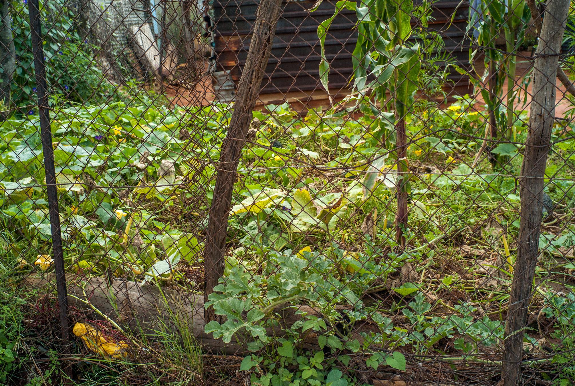 Garden_Route_Series-L1003913.jpg