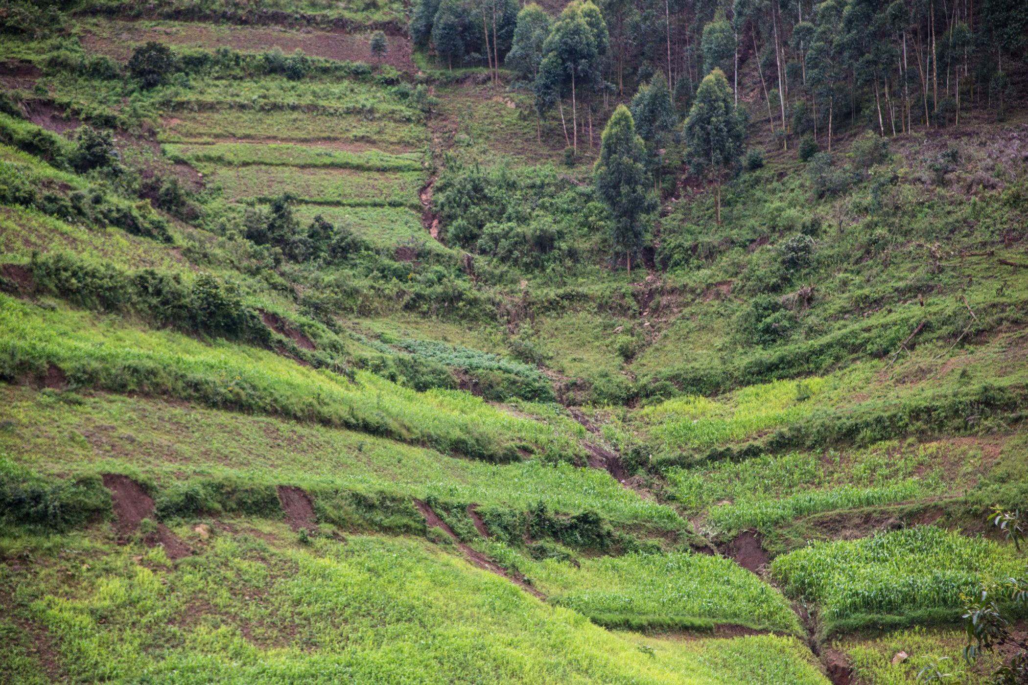Uganda Road Trip_Series-IMG_0463-untitled.jpg
