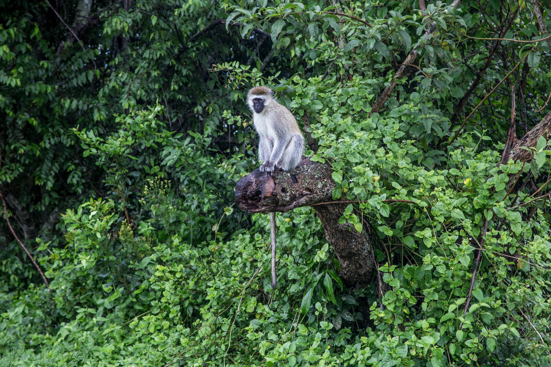 Uganda Road Trip_Series-IMG_0283-untitled.jpg