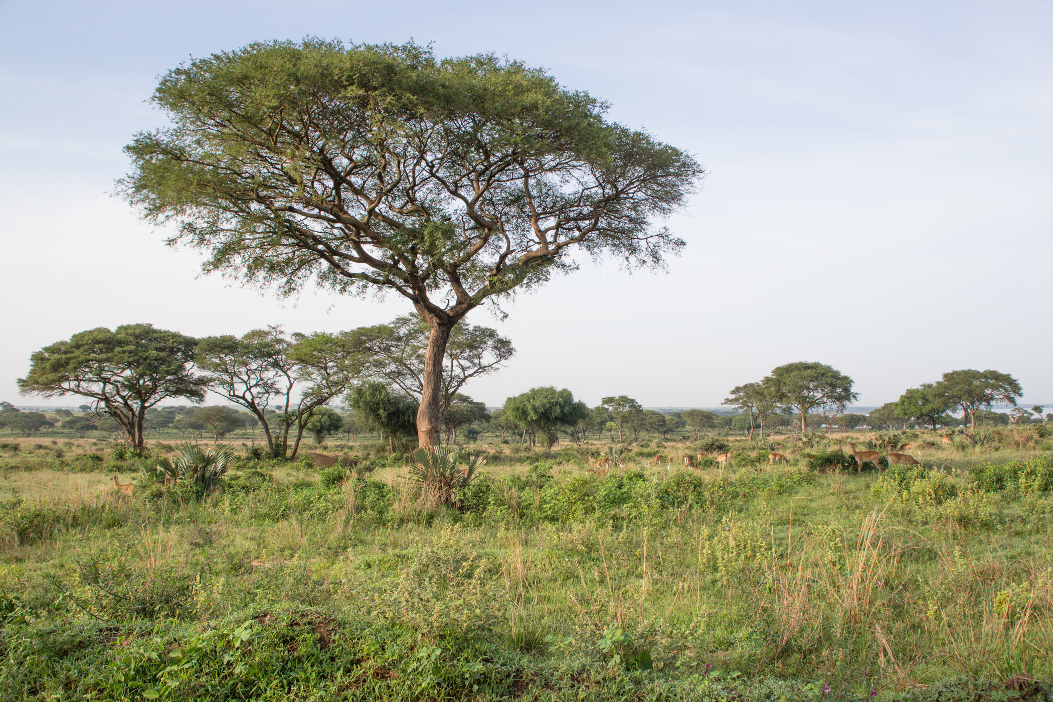 Uganda Road Trip_Series-IMG_1501-untitled.jpg