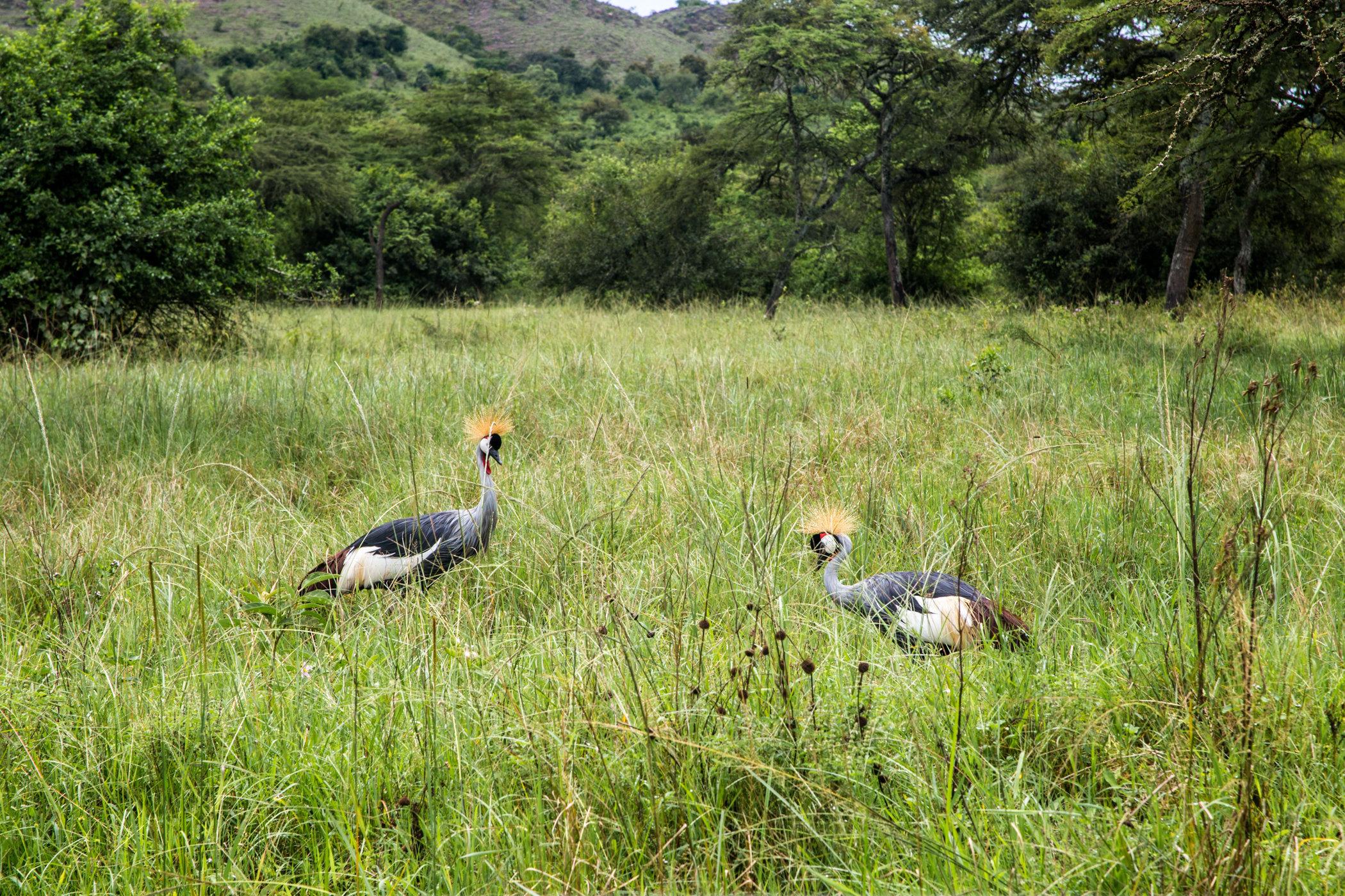 Uganda Road Trip_Series-IMG_0299-untitled.jpg