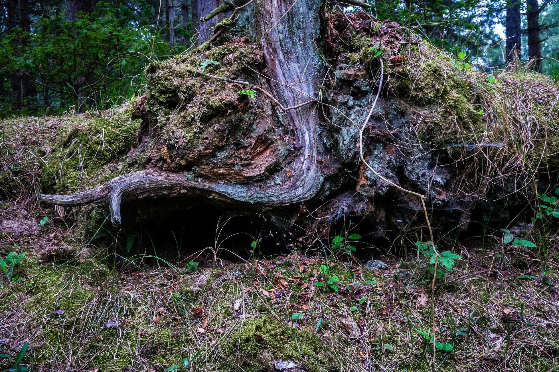 The_Wood-1390.jpg
