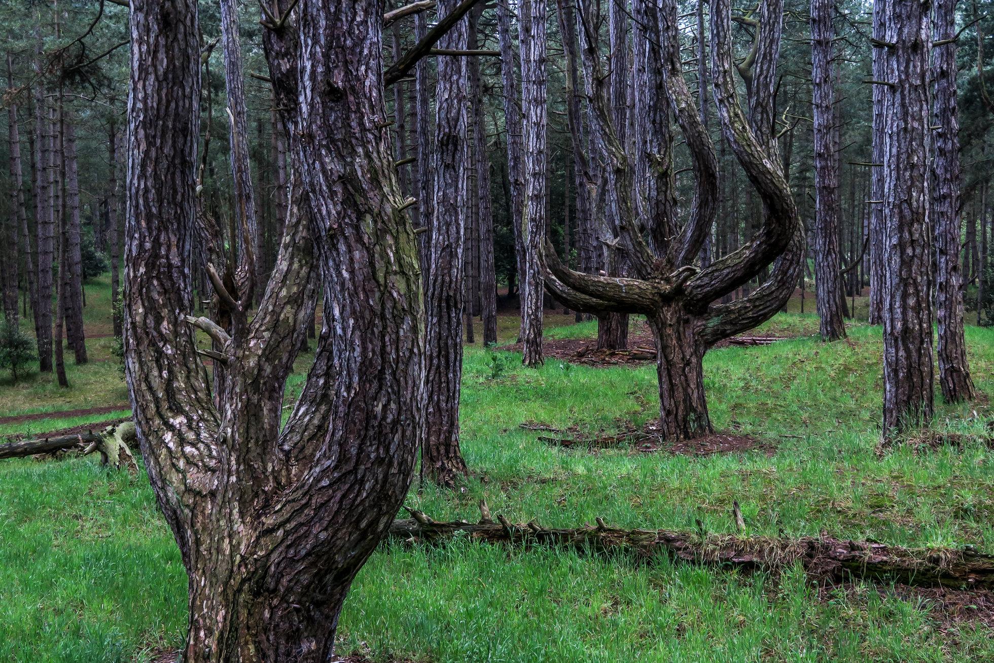 The_Wood-1473.jpg