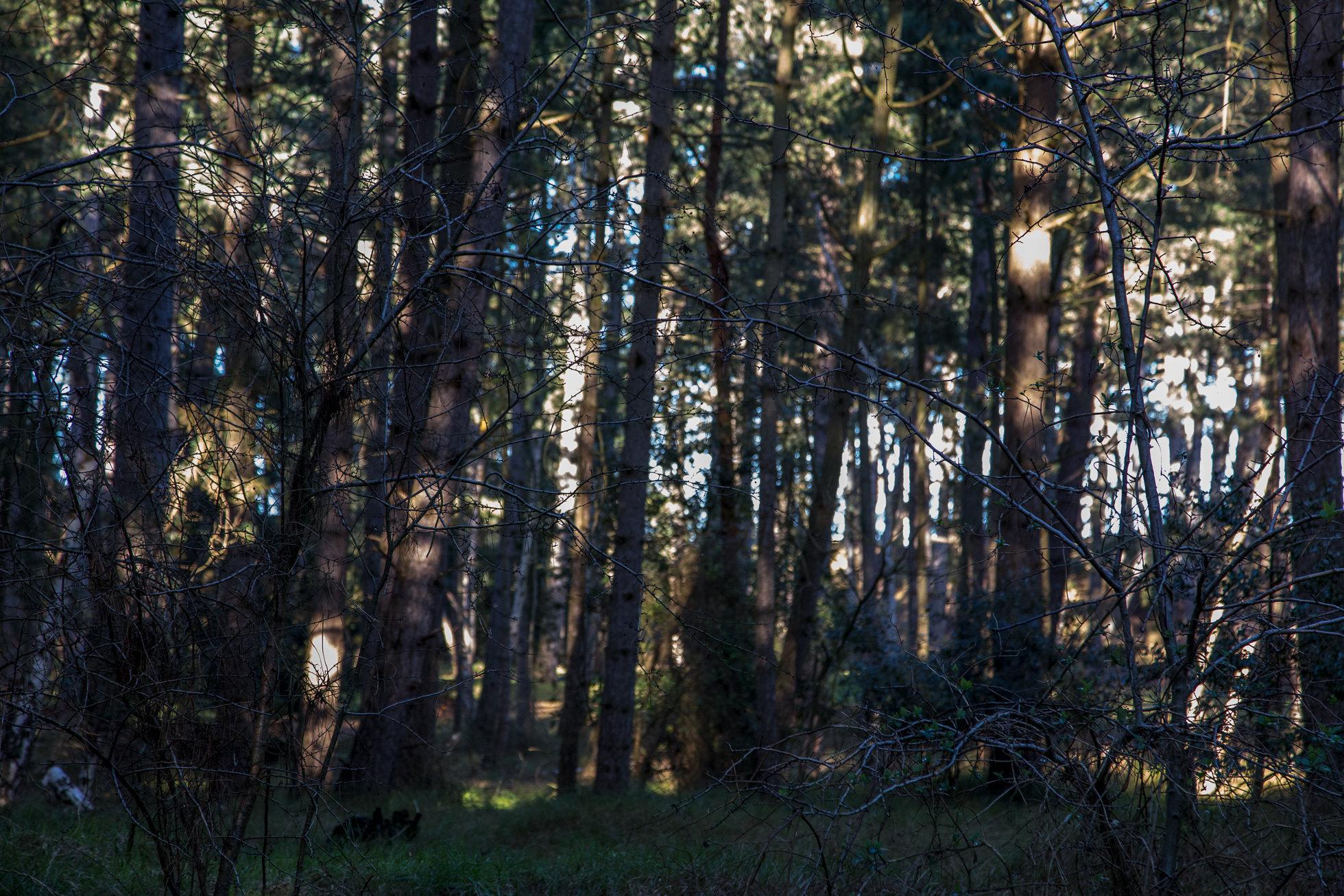 The_Wood-9013.jpg