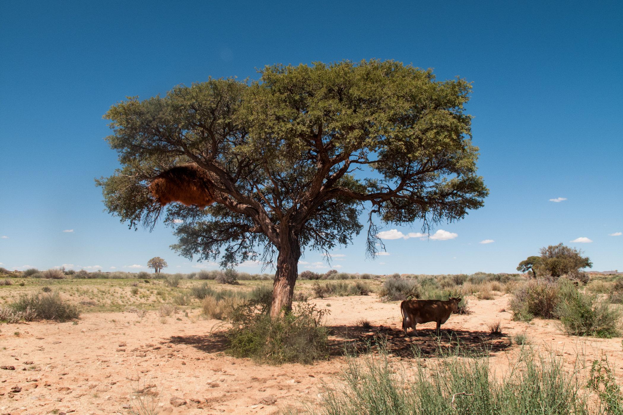 Africa travel-IMG_0720.jpg
