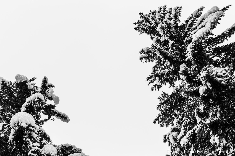 JLF-TREESNOW-20170206-0004.jpg