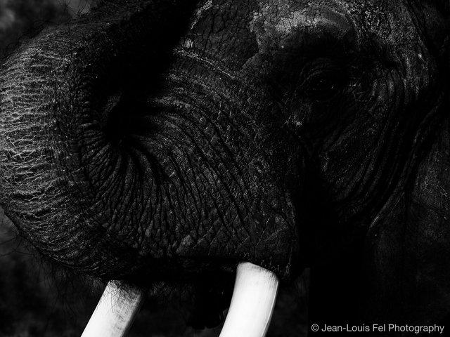 JLF-ELEPHANT-20180419-0005.jpg
