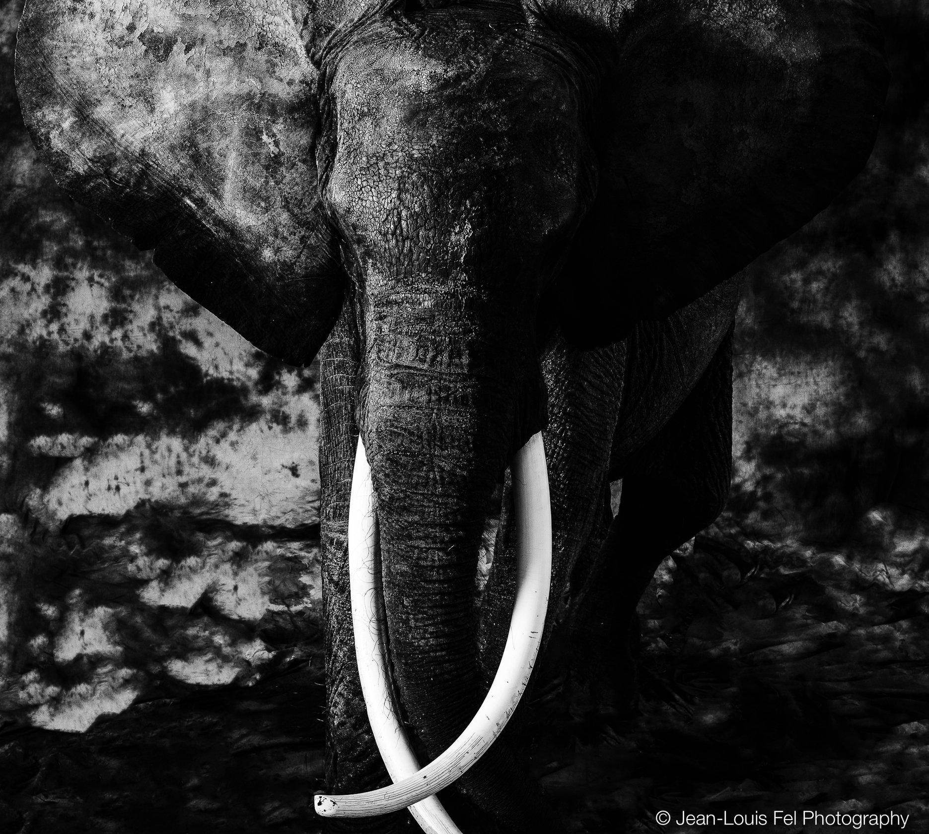 JLF_ELEPHANT_006.jpg