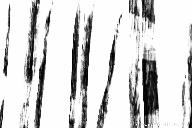 JLF-TREES-20171228-0005.jpg