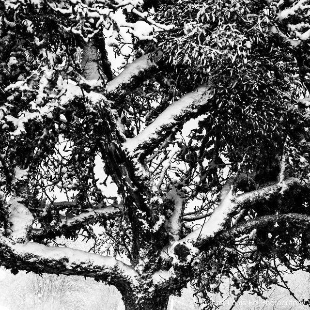 JLF-TREES-20171227-0003.jpg