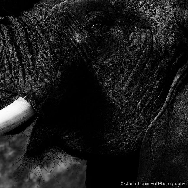 JLF-ELEPHANT-20180419-0008.jpg