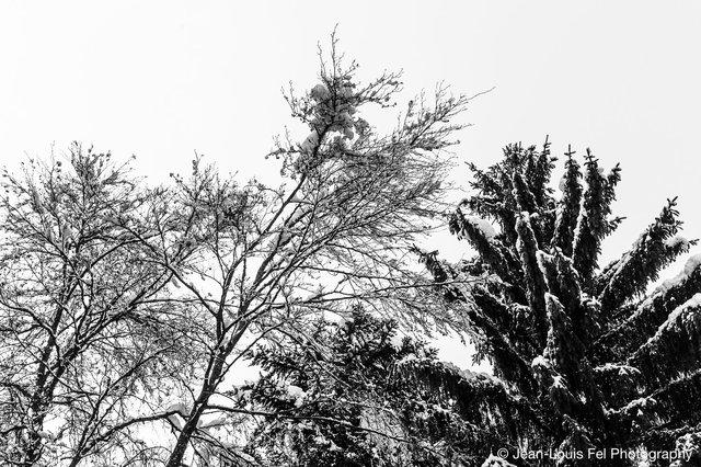JLF-TREESNOW-20170206-0003.jpg