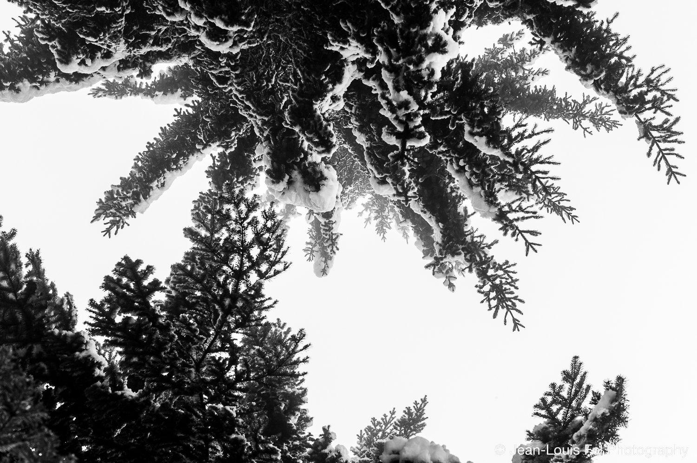 JLF-TREESNOW-20170206-0009.jpg
