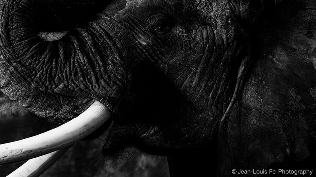 JLF-ELEPHANT-20180419-0009.jpg