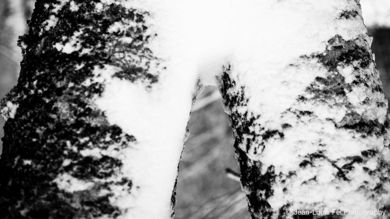 JLF-TREES-20171227-0004.jpg