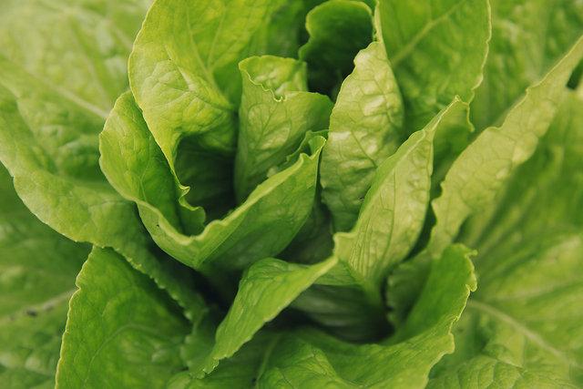 Lettuce 'Northern Queen'
