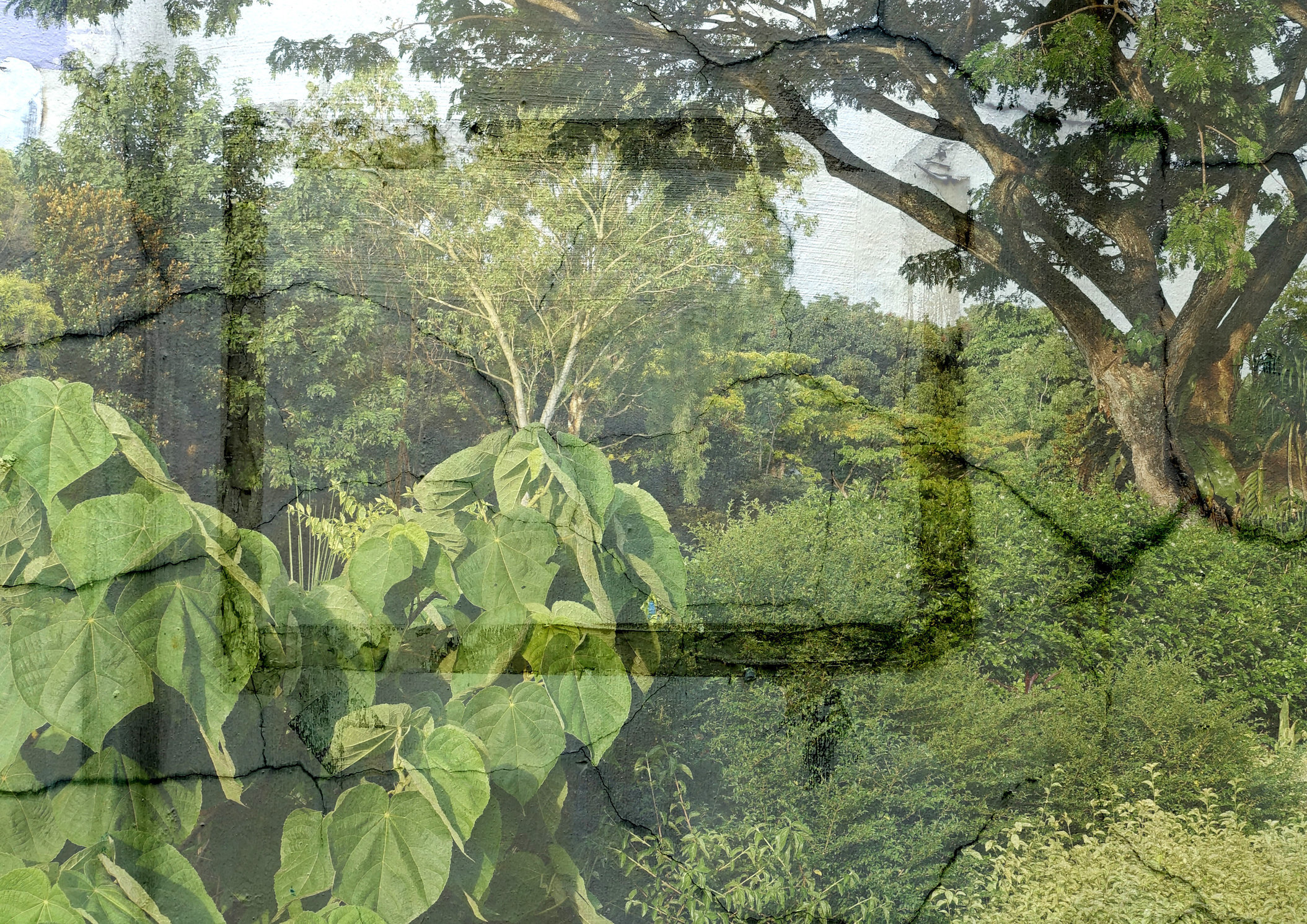 SINGAPORE GREEN 2