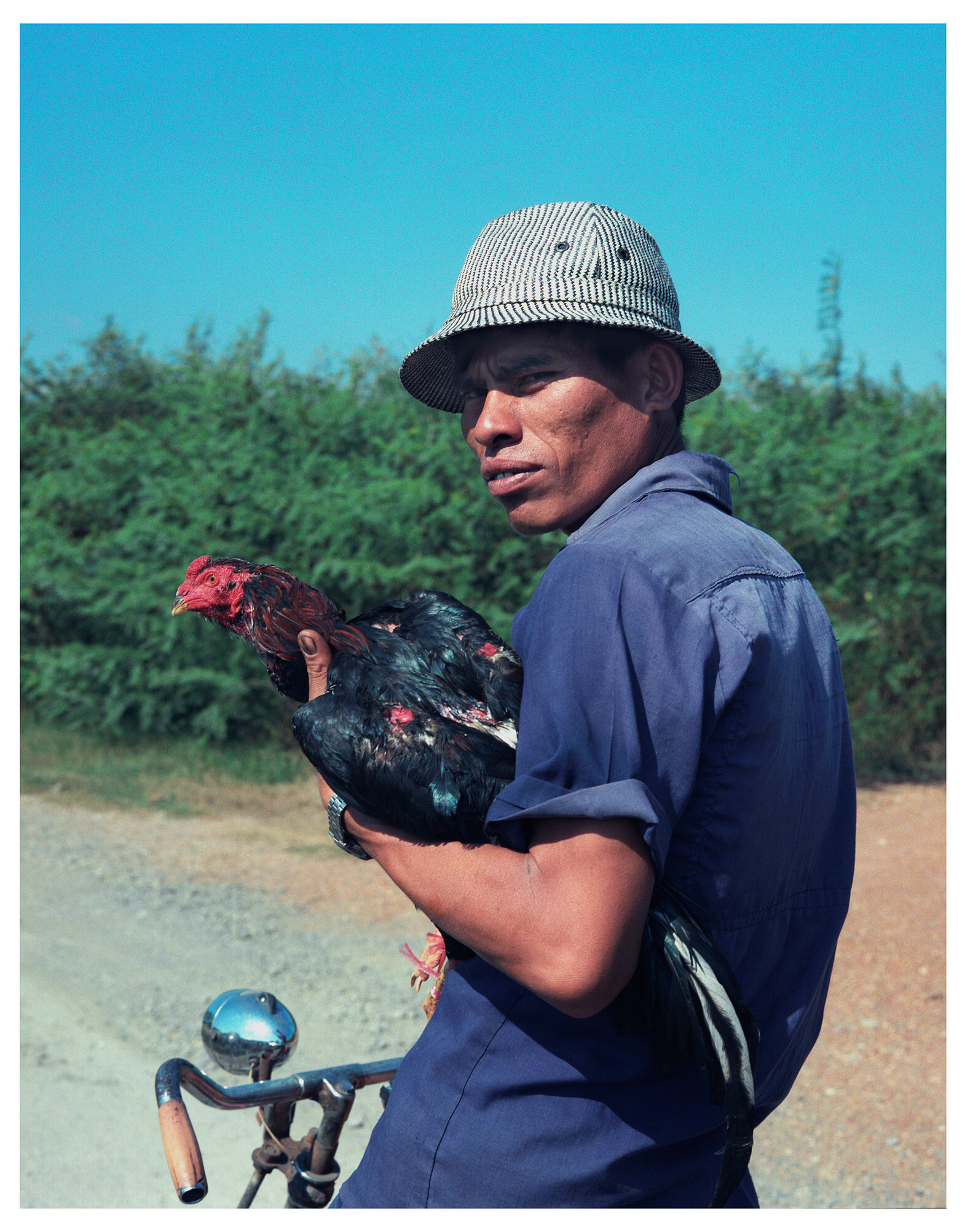 Animal Series Rooster & Man.jpg