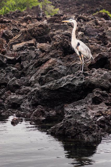 150422_Galapagos-1629.jpg