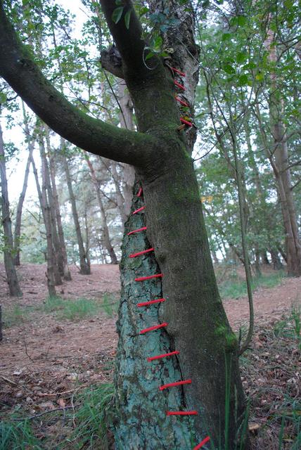 Tree restorations