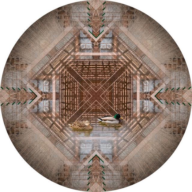 Circle 16 (Ducks)