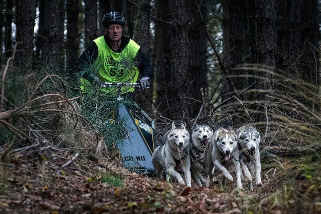 Sledehondenwedstrijd, Gilze, 2019