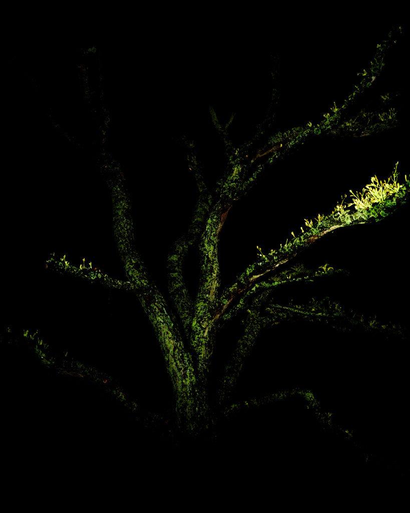 Green Branch, 2017, Archival Pigment Print, 98 x 78 cm, Unique Piece
