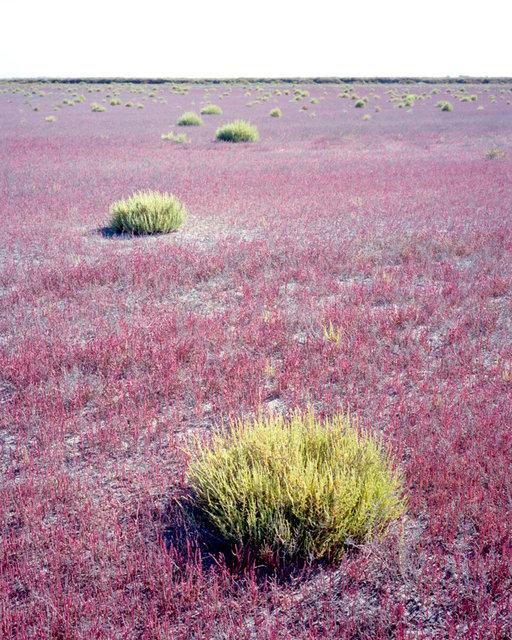 Pink Field, 2017, Archival Pigment Print, 98 x 78 cm, Ed. 3 + 2AP
