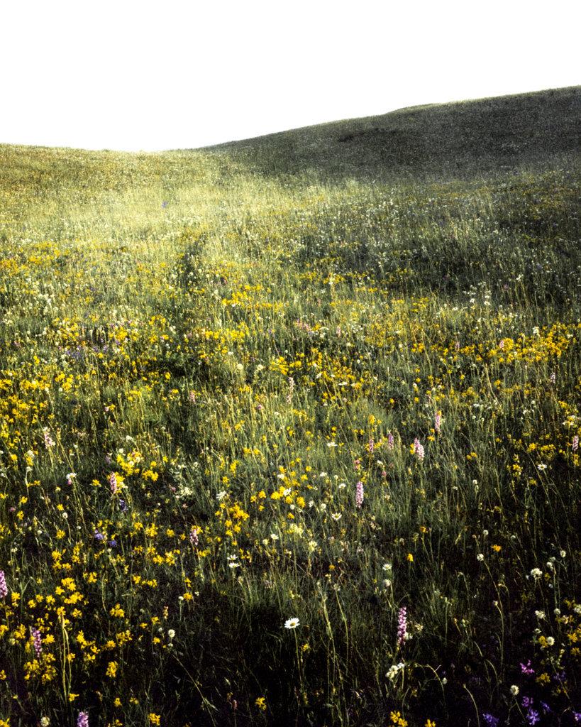 Grass Field, 2017, Archival Pigment Print, 98 x 78 cm, Ed. 3 + 2AP