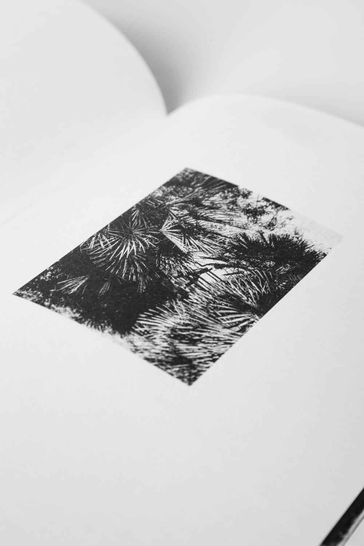 ¡Pírate!_Book_2017-4.jpg