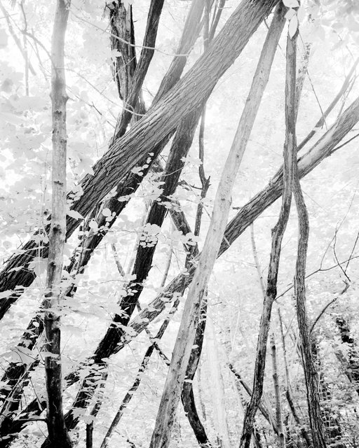 Moving Trees 03, 2018, Archival Pigment Print,  98 x 78,4 cm, Ed. 5 + 2AP / Also Available 135 x 107,8 cm, Ed. 3 + 2AP
