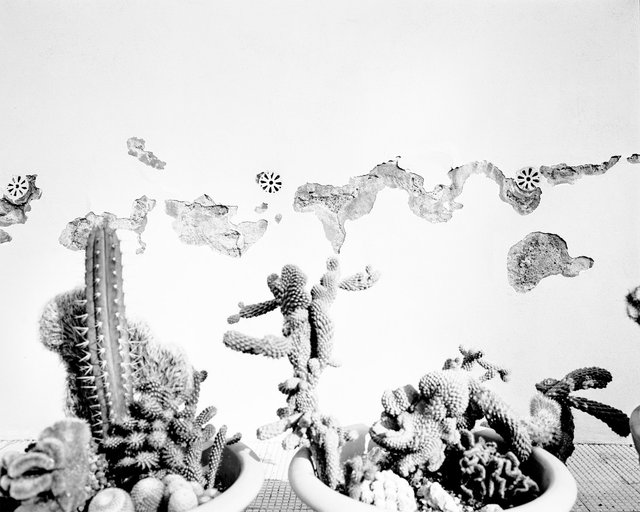 Cactus Thoughts, 2018, Archival Pigment Print, 32 x 25,6 cm, Ed. 3 + 2AP