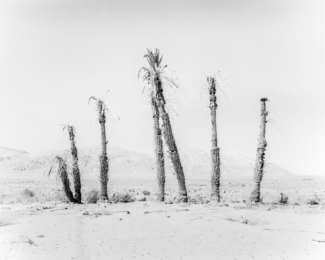 House of Palms, 2019, Archival Pigment Print, 135 cm x 107,8 cm, Ed. 3 + 2AP