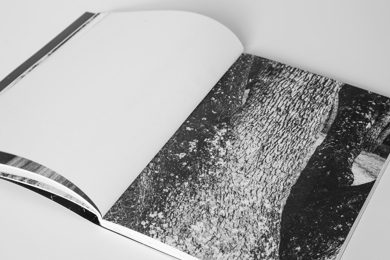 ¡Pírate!_Book_2017-12.jpg