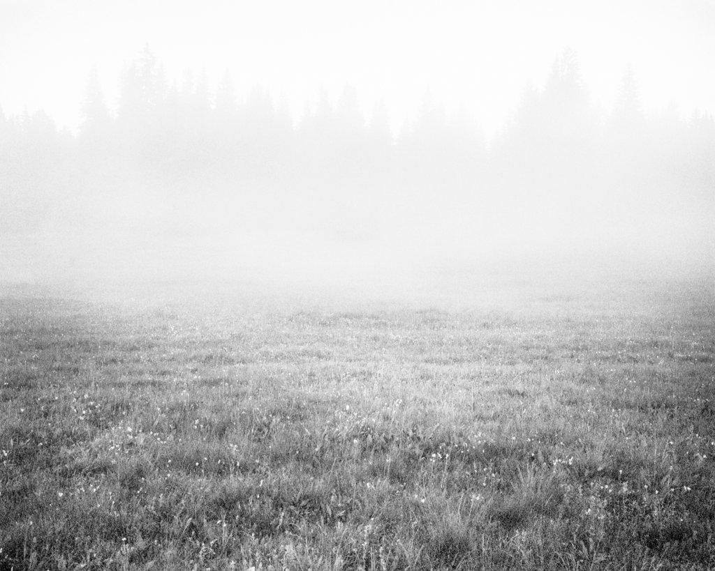 Mist, 2017, Archival Pigment Print, 135 x 108 cm, Unique Piece