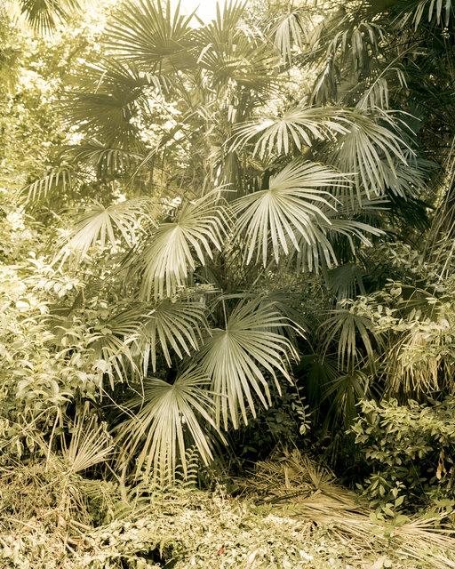Green Plant, 2018, Archival Pigment Print, 50 x 40 cm, Ed. 3