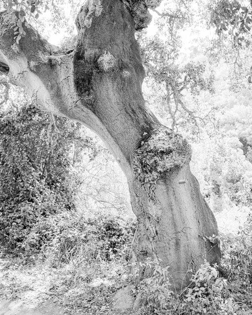 Tree 01, 2019, Archival Pigment Print, 42 x 34 cm, Ed. 5 + 2AP