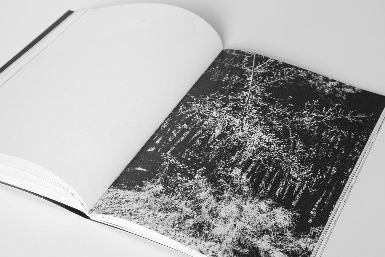 ¡Pírate!_Book_2017-11.jpg