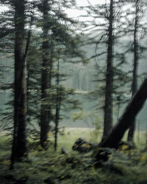 Moving Trees 01, 2017, Archival Pigment Print, 98 x 78 cm, Ed.3 + 2AP