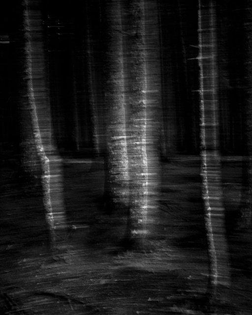Moving Trees 02, 2017, Archival Pigment Print, 100 x 80 cm, Ed.3 + 2AP