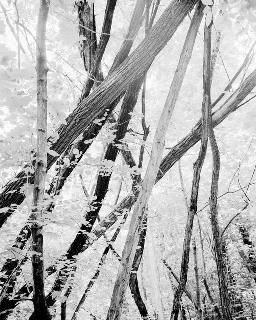Moving Trees 03, 2018, Archival Pigment Print, 98 x 78,4 cm, Ed. 3
