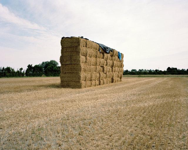 lon-bio-hay.jpg