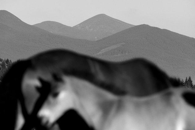 Horses_061.jpg