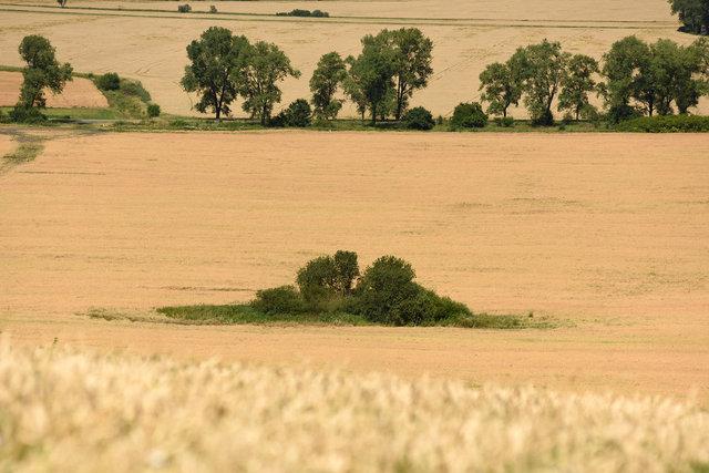 Terra Galicia_(Yurko Dyachyshyn)_25.jpg