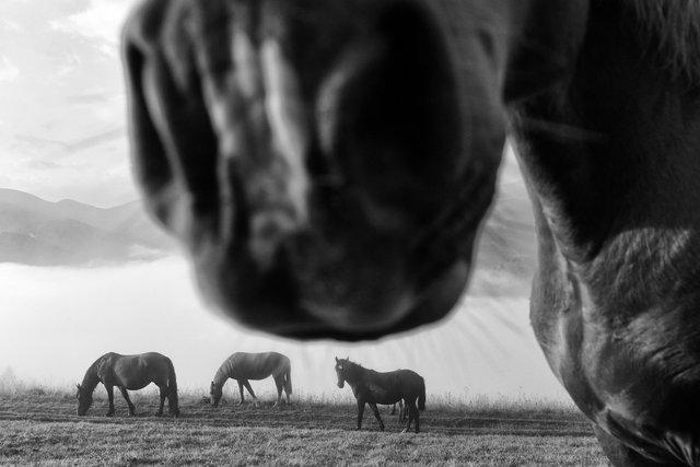 Horses_117.jpg