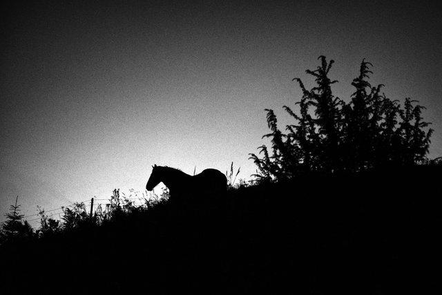 Horses_071.jpg