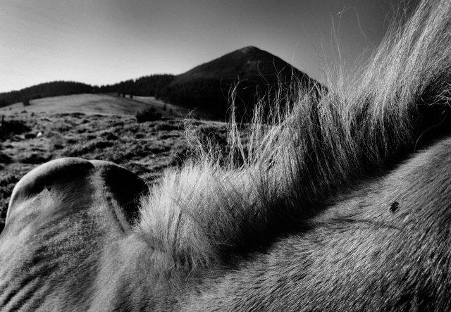 Horses_112.jpg